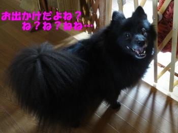 お出かけ準備OK!.jpg