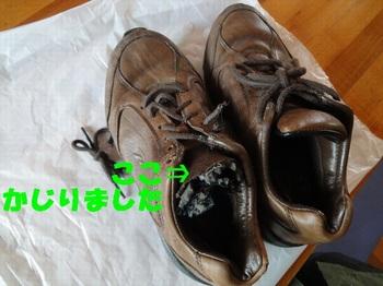 かじられた靴.jpg