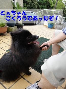 梅雨の水元公園5.jpg