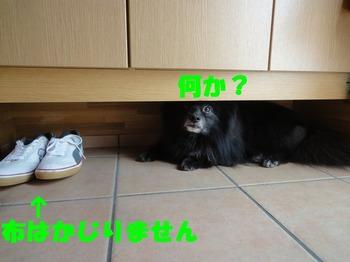 虎鉄9月2.jpg