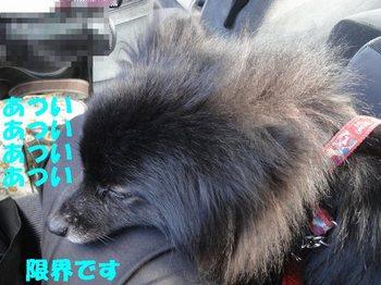 虎鉄いん草津12.jpg