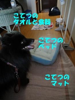 虎鉄いん草津2.jpg