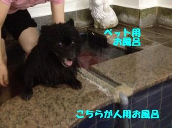 虎鉄いん草津7.jpg