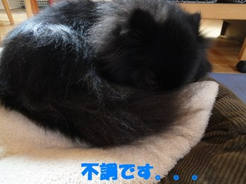 虎鉄の不調1.jpg