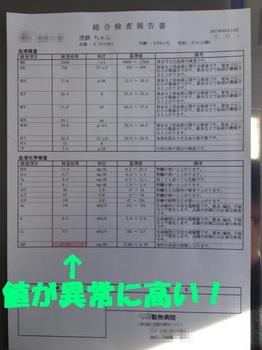 虎鉄の不調2.jpg