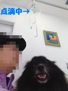 虎鉄の不調3.jpg