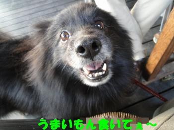 虎鉄の不調5.jpg