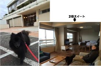 三浦海岸2015の16-.JPG