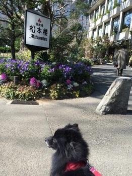 日比谷公園2月の3.jpg